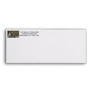 white tiger looking right animal image envelope