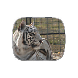 white tiger looking right animal image jelly belly tin