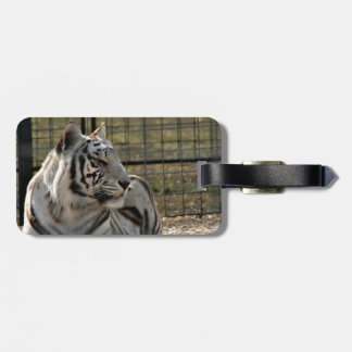 white tiger looking right animal image tag for luggage