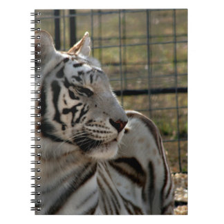 white tiger looking right animal image notebook