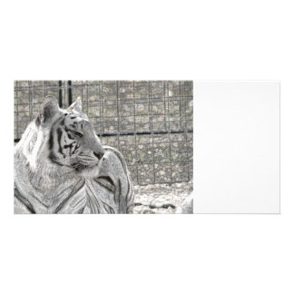 white tiger looking right bw sparkle photo card
