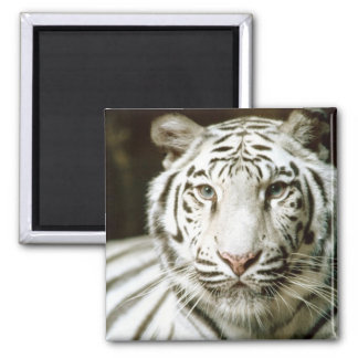 White Tiger Fridge Magnets
