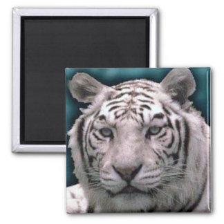 White Tiger, Magnet