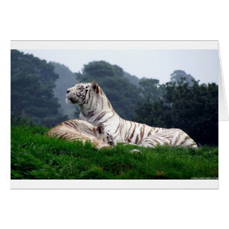 White Tiger Mamma and Cub Card
