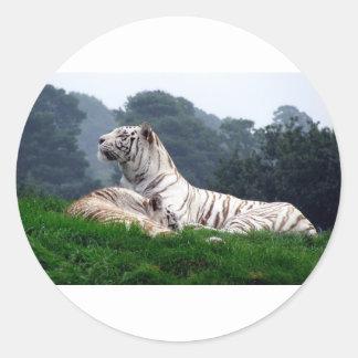 White Tiger Mamma and Cub Classic Round Sticker