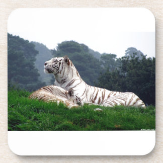 White Tiger Mamma and Cub Drink Coaster