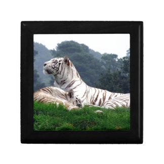 White Tiger Mamma and Cub Gift Box