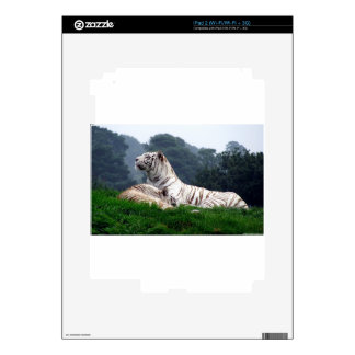 White Tiger Mamma and Cub iPad 2 Decal