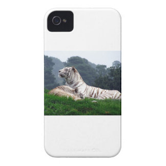 White Tiger Mamma and Cub iPhone 4 Cover
