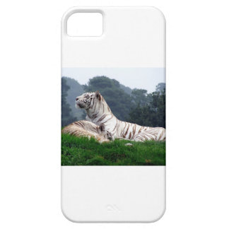 White Tiger Mamma and Cub iPhone SE/5/5s Case
