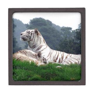 White Tiger Mamma and Cub Keepsake Box