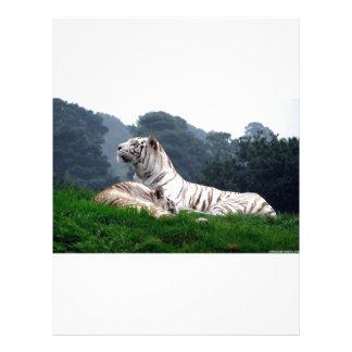White Tiger Mamma and Cub Letterhead