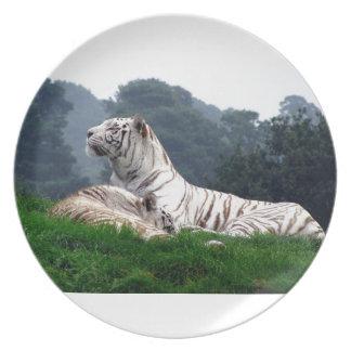 White Tiger Mamma and Cub Melamine Plate