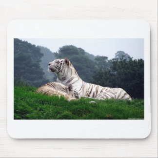 White Tiger Mamma and Cub Mouse Pad