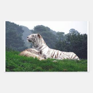 White Tiger Mamma and Cub Rectangular Sticker