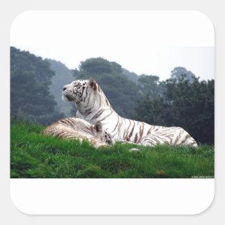 White Tiger Mamma and Cub Square Sticker