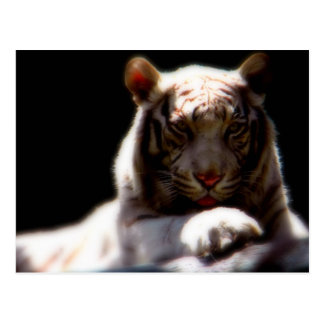 White Tiger Mirage Postcard
