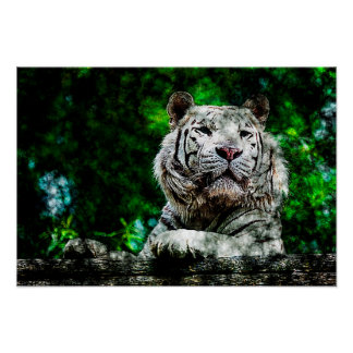 White Tiger Mixed Media Poster