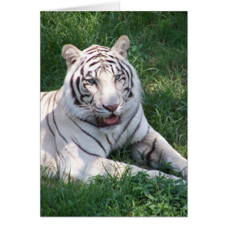 White tiger on green grass vertical frame picture card