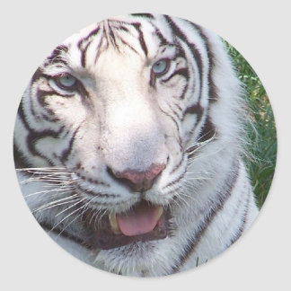 White tiger on green grass vertical frame picture round stickers
