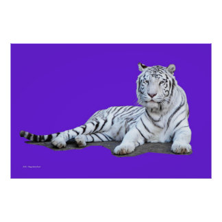 White Tiger On Purple Poster