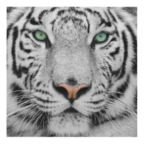 White Tiger Panel Wall Art