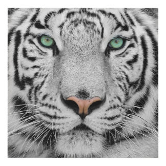 White Tiger Panel Wall Art