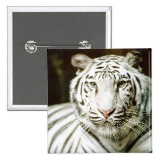White Tiger Pinback Button