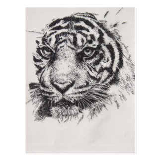 White Tiger Portrait Postcard