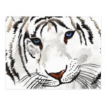 White Tiger Post Card