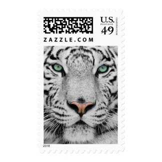 White Tiger Stamps