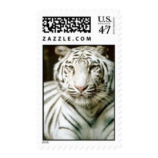 White Tiger Postage
