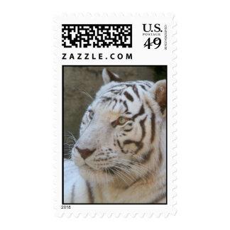 White Tiger Postage Stamp