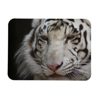 White Tiger Premium Magnet Flexible Magnets