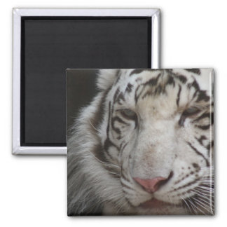 White Tiger Square Magnet Magnet