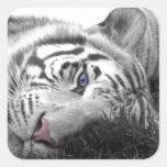 White tiger square sticker