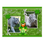 white-tiger-st-patricks-0004-d postal