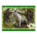 white-tiger-st-patricks-0025 tarjeta postal