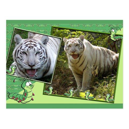 white-tiger-st-patricks-0033 tarjetas postales