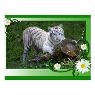 white-tiger-st-patricks-0042 tarjeta postal
