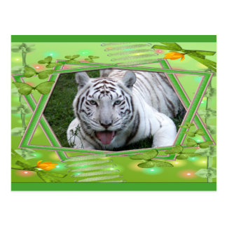 white-tiger-st-patricks-0056 postcards