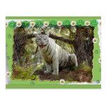 white-tiger-st-patricks-0064 postales