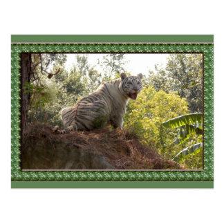 white-tiger-st-patricks-0065 postales