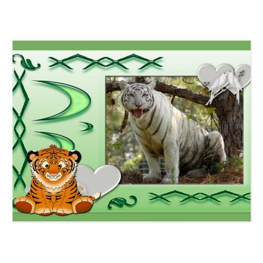 white-tiger-st-patricks-0069 tarjetas postales