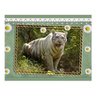 white-tiger-st-patricks-0076 tarjeta postal