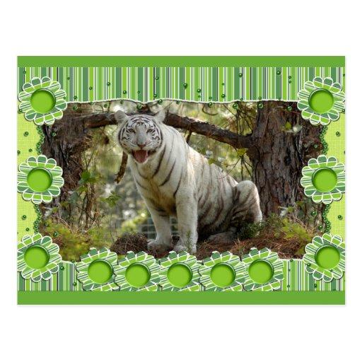 white-tiger-st-patricks-0082 postal