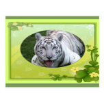 white-tiger-st-patricks-0086 postal