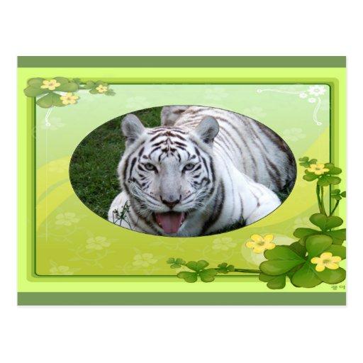white-tiger-st-patricks-0086 tarjeta postal