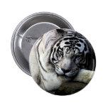 White Tiger Stare Pinback Button