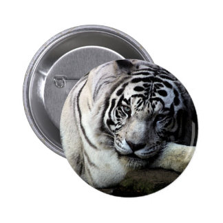 White Tiger Stare Pinback Button